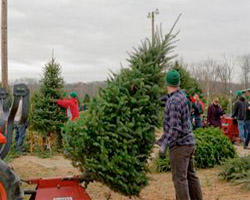 images from bartelsfarmcom - Christmas Tree Farms In Ohio