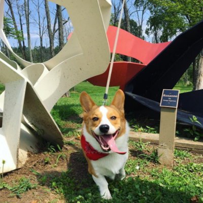 Dog: Pyramid Hill