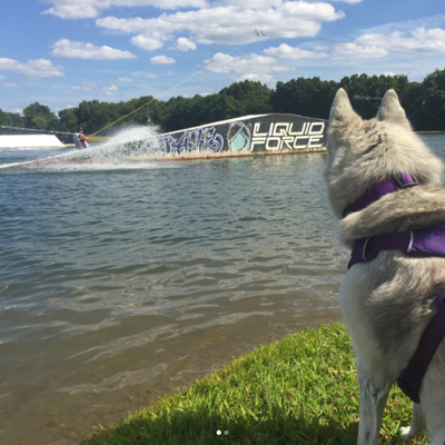 Dog: Wake Nation