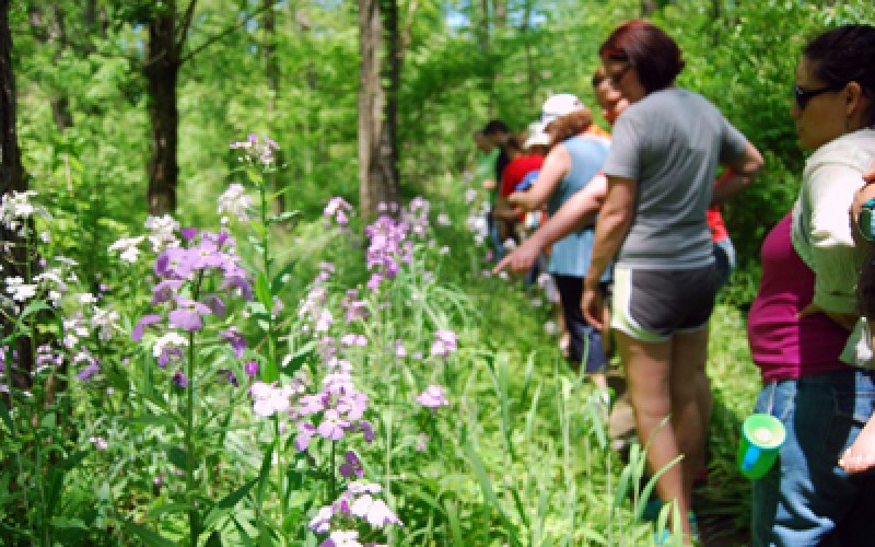 Wildflower Walk Oxford, Ohio