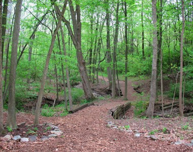 Bull's Run Arboretum - Main Image